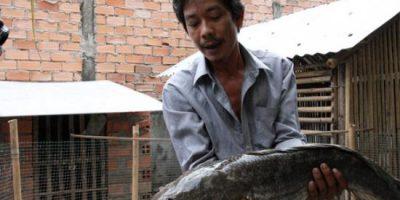 Tiền Giang: bắt cá lóc khủng nặng 6 ký