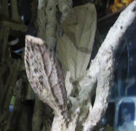 Sự thật về cây hóa thạch 3 triệu USD ở Thanh Hóa