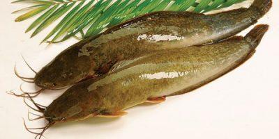 Mẹo rửa cá tôm không bị tanh hôi