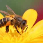 Công dụng đáng ngờ của mật ong