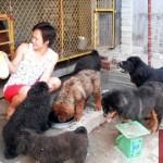 Đại gia 8x chi triệu USD chơi chó Ngao