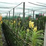 Khởi nghiệp với nghề trồng lan