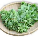 Rau tươi là nguồn vitamin và muối khoáng quan trọng