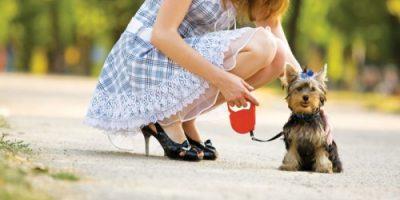 Làm giàu từ dịch vụ… vệ sinh cho thú cưng