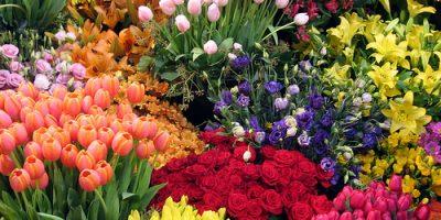 Để giữ hoa tươi lâu trong ngày tết