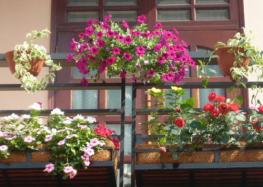 Cắm hoa để hoa tươi lâu hơn