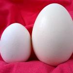Trứng ngỗng bổ hơn trứng gà?