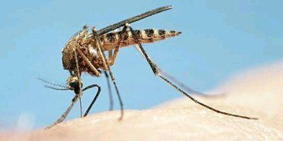 Mẹo đơn giản chống muỗi hiệu quả