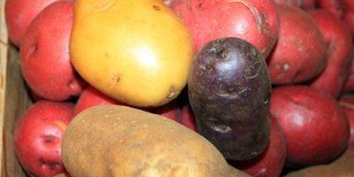 Khoai tây giúp giảm cân và chống lão hóa