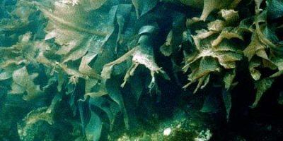 Cây thủy sinh - Cá cảnh đẹp tại cacanh.vn