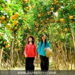 Vườn du lịch tại Cần Thơ – Điểm đến du lịch đậm chất văn văn hóa Miền Tây
