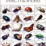 Trở thành triệu phú nhờ… côn trùng