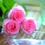 Một số bài thuốc chữa bệnh từ hoa