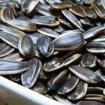 Không nên ăn nhiều hạt hướng dương