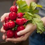 Củ cải đường có công dụng gì?