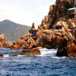 Yến sào Nha Trang – món quà quý của tự nhiên